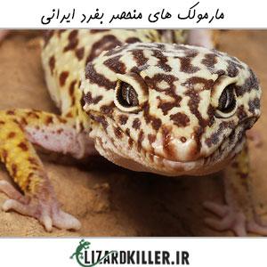 انواع مارمولک های ایرانی