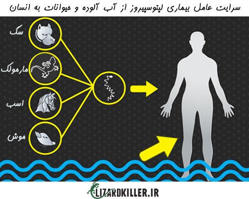 بیماری لپتوسپیروز از انواع حیوانات و مارمولک ها به انسان منتقل می شود