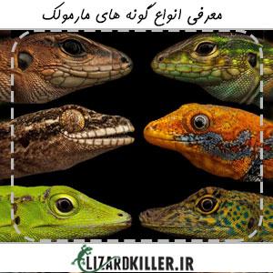 انواع گونه های مارمولک
