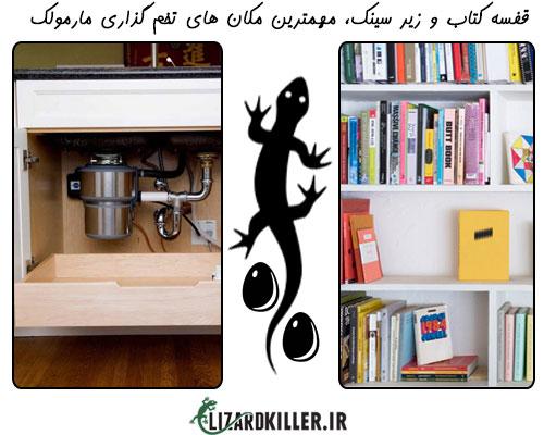 از رایج ترین مکان های تخم گذاری مارمولک ها می توان به پشت قفسه کتاب و سینک ظرفشویی اشاره کرد